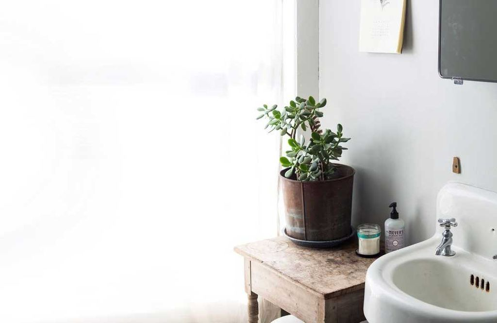 14 Bathroom Plant Ideas That Will Brighten Your Home - Jade Plant