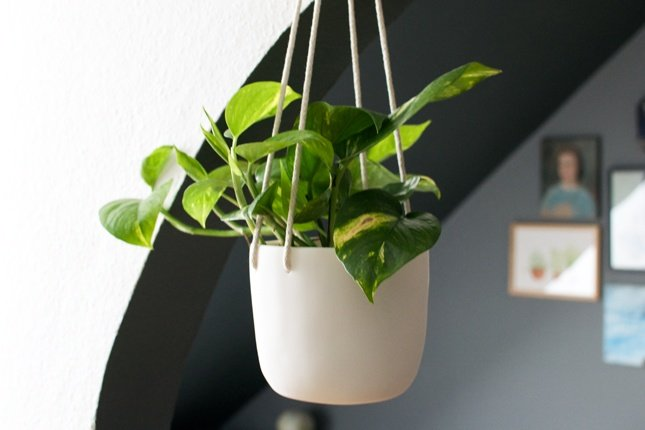 14 Bathroom Plant Ideas That Will Brighten Your Home - Pothos Plant