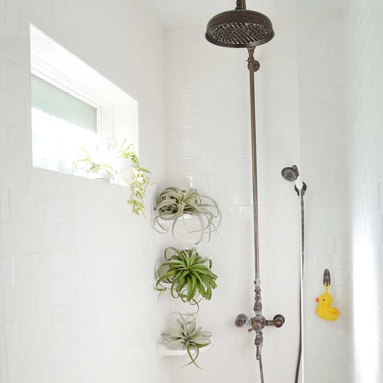 14 Bathroom Plant Ideas That Will Brighten Your Home - Air Plant
