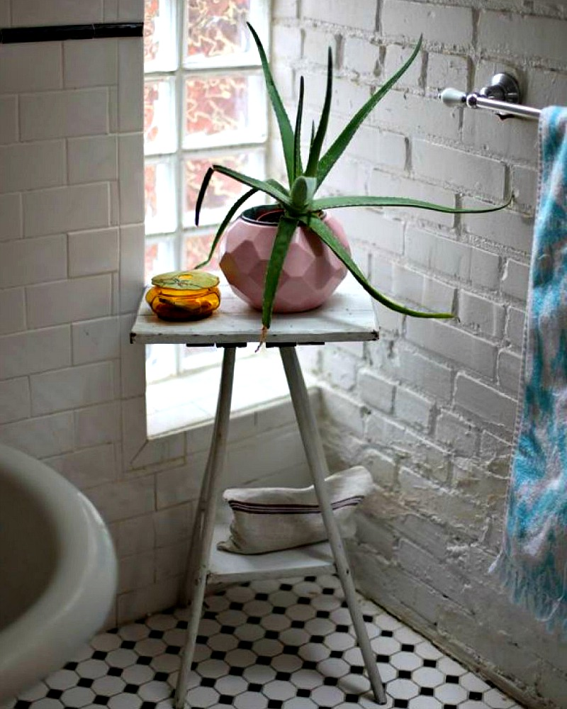 14 Bathroom Plant Ideas That Will Brighten Your Home - Aloe Vera