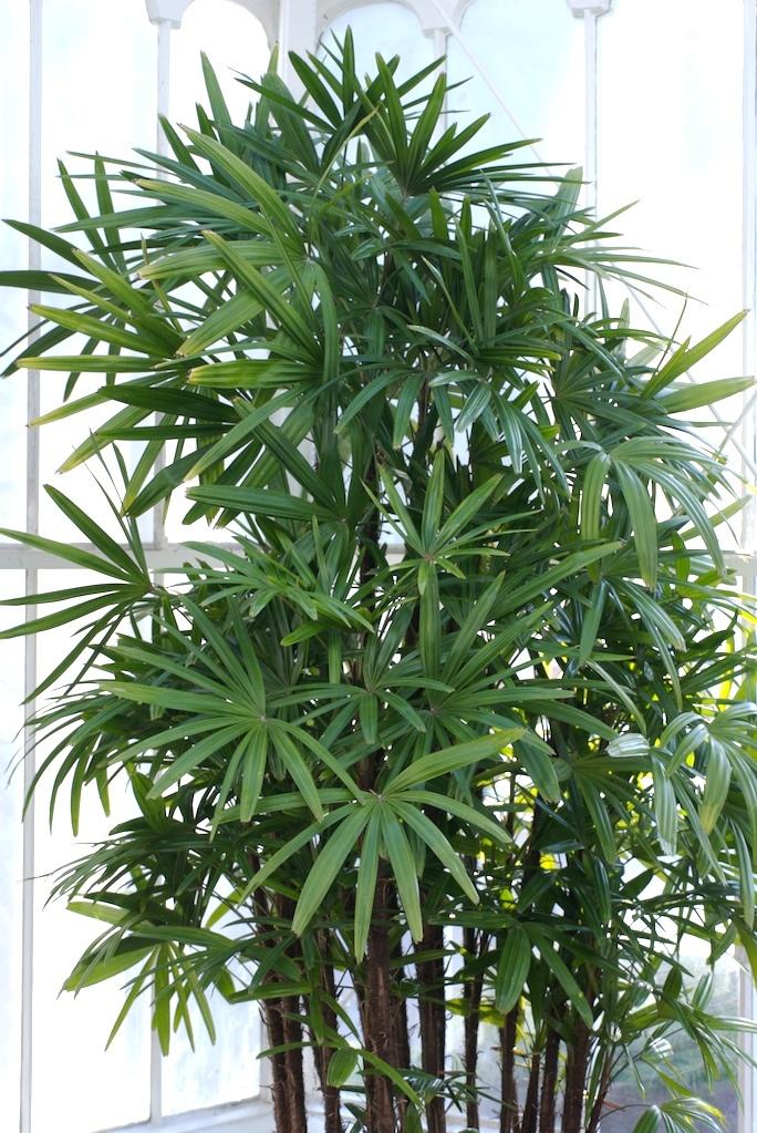 Bamboo Palm Tree in Bathroom
