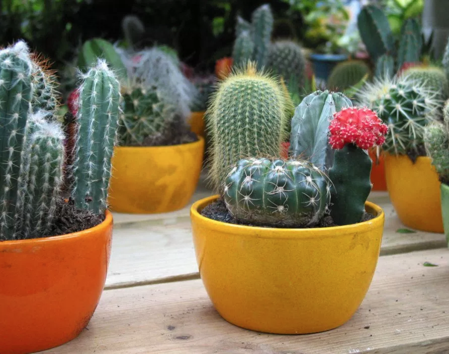 14 Bathroom Plant Ideas That Will Brighten Your Home - Cactus