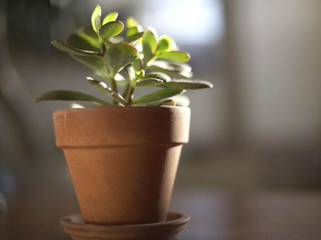 7 Ways to Go Green Around the House (Indoors and Outdoors! - Purchase a House Plant