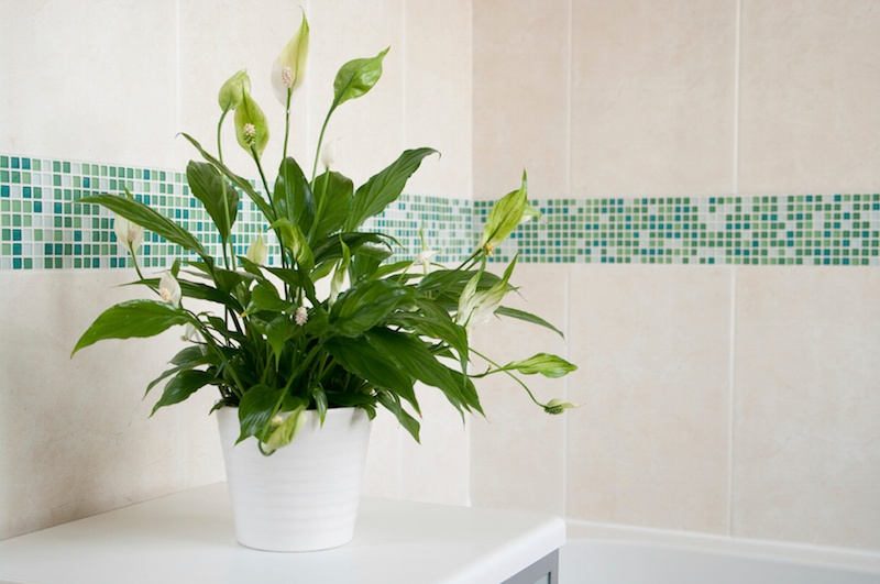 14 Bathroom Plant Ideas That Will Brighten Your Home - Peace Lily