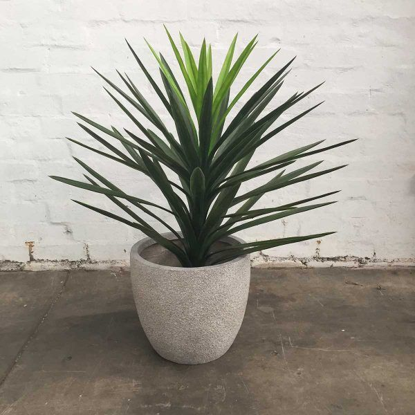 14 Bathroom Plant Ideas That Will Brighten Your Home - Yucca